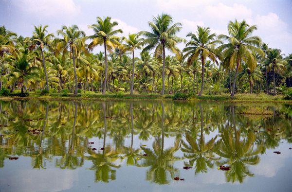 cocotiers les pieds dans l'eau