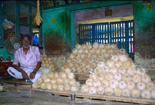 Noix de cocos
